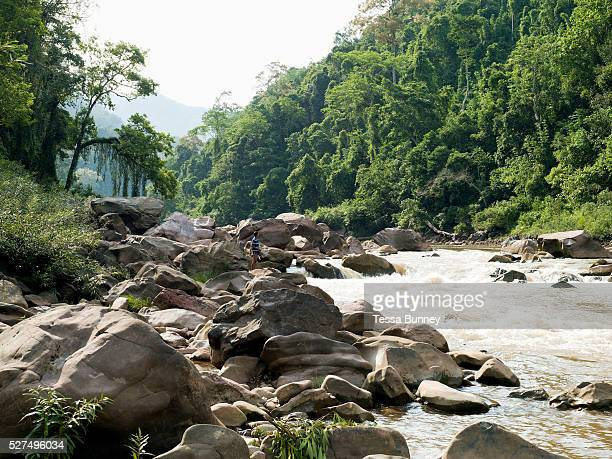 Boatman So checks the best route up the rapids on the Nam Ou river during the dry season when the river level is low Phongsaly province Lao PDR The...