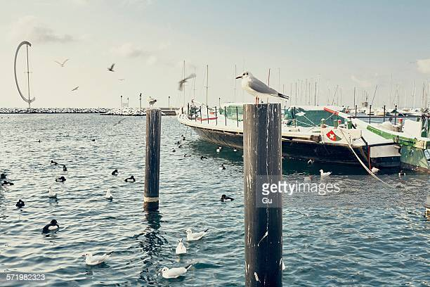 Boats and seabirds on Lake Geneva waterfront, Lausanne, Switzerland