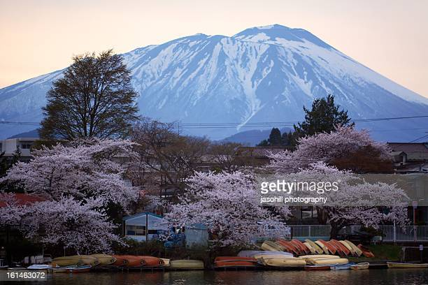 boats, blossoms and blue - 盛岡市 ストックフォトと画像