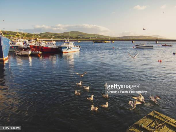 boats in the harbour - christina grosse stock-fotos und bilder