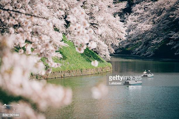Boats in the pond with view of Sakura