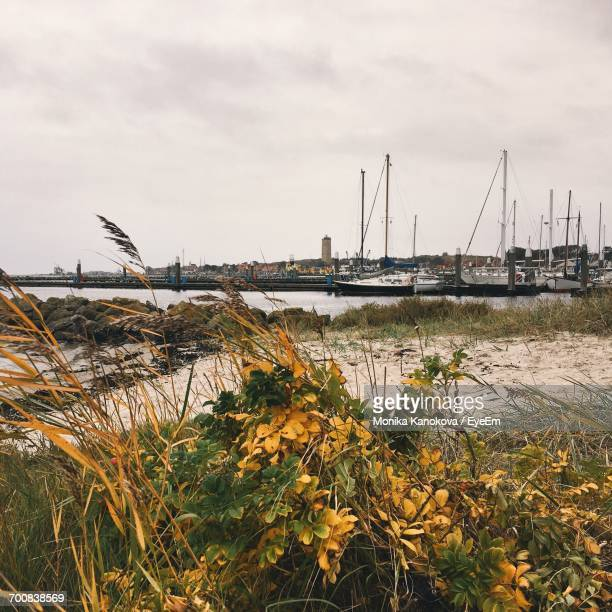 Boats Moored At Harbor In Terschelling