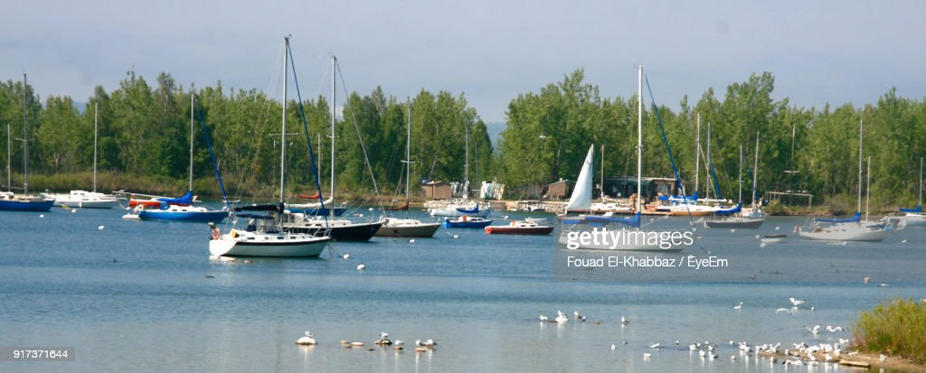 Boats Moored By Trees Against Sky : Stock Photo