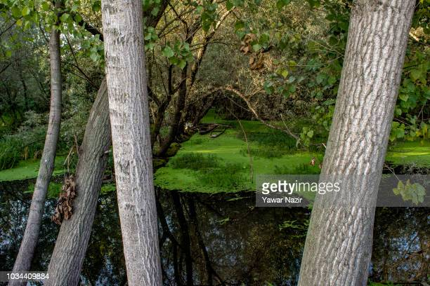 Boats moored in middle of a stream on September 16 2018 in Srinagar the summer capital of Indian administered Kashmir India Kashmir the Muslim...