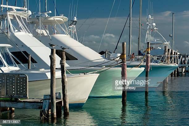 boats moored on isla mujeres, mexico - mujeres fotos stockfoto's en -beelden