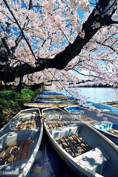 boats on hirosaki castle moat - hirosaki castle stock pictures, royalty-free photos & images