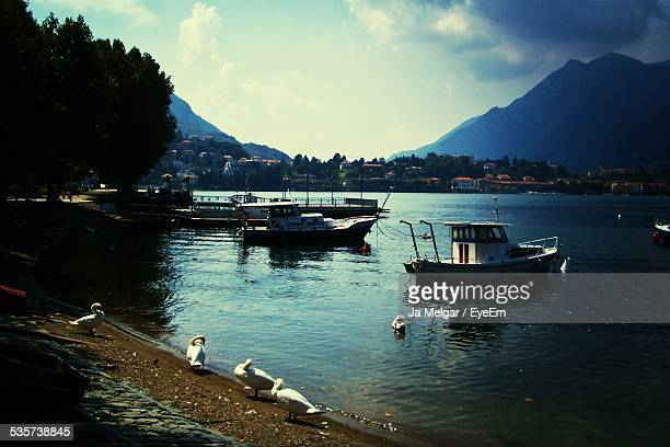 boats on mountain lake and swans - cinq animaux photos et images de collection