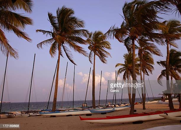 Boats & Palms