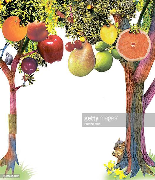 Bob Campbell color illustration of trees producing a variety of fruits orange apple peach plum pear lime lemon cherries and grapefruit