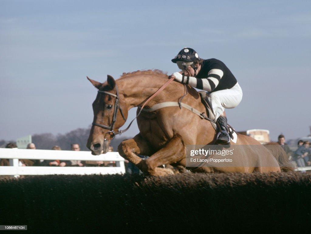 Bob Champion Riding Henry Tuffnut At Kempton Park : News Photo
