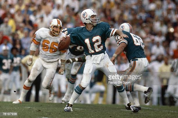 Bob Griese of the Miami Dolphins drops back to pass in a circa mid 1970's NFL game aginst theTampa Bay Buccaneers in Miami Florida Griese played for...