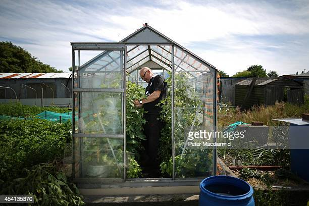 Bob Robson works on his allotment on August 7, 2013 in New York, England. The original reason for the name of New York is not known, but it is...