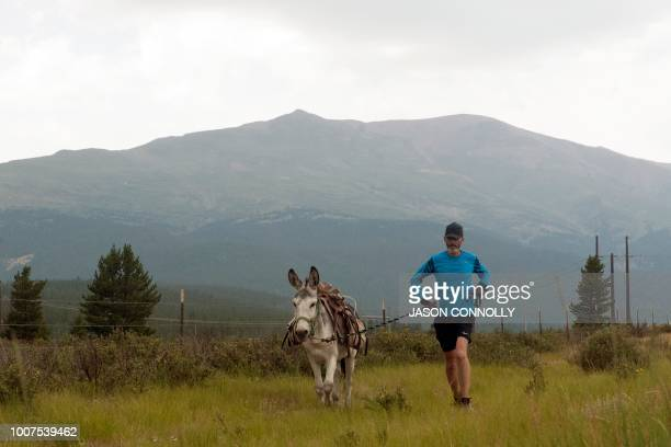 Bob Sweeney of Leadville Colorado runs with his burro Yukon during the 70th Annual Burro Days Race in Fairplay Colorado on July 29 2018 Racers equip...