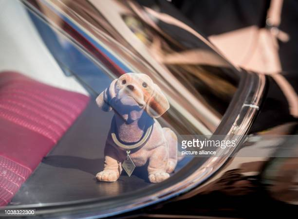 A bobblehead dachshund seen through the rear window of a classic car waiting to pick up a bride and groom in Frankfurt am Main Germany 05 September...
