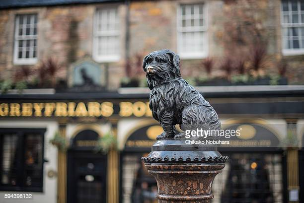 bobby - edinburgh stock pictures, royalty-free photos & images