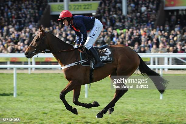 Bobs Worth ridden by Barry Geraghty going to post for the Albert Bartlett Novices' Hurdle on Gold Cup Day, during the Cheltenham Festival.