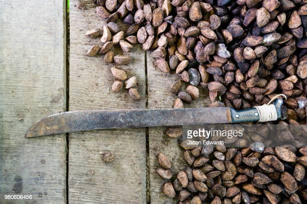 a machete and a mound of fresh brazil nuts harvested from the rainforest. - machete stock pictures, royalty-free photos & images