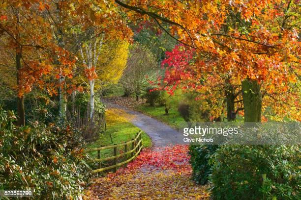 bodenham arboretum - arboreto foto e immagini stock