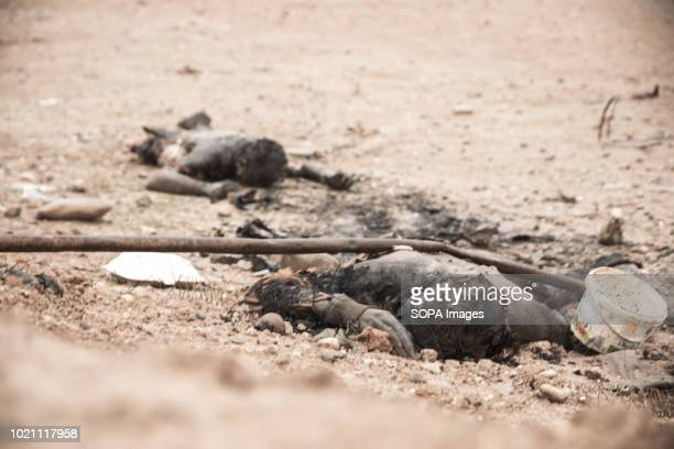 Bodies of executed Islamic State militants