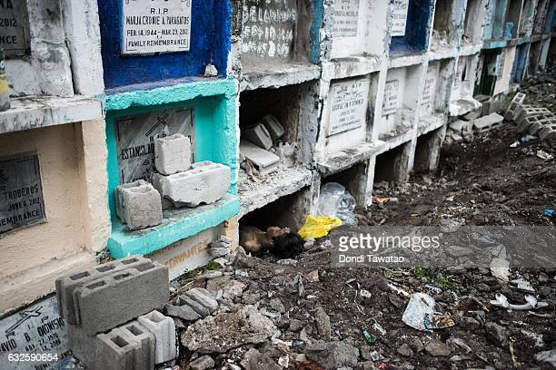 Bodies of victims of extrajudicial killings are buried on January 24 2017 in Manila Philippines Many bodies of victims of extrajudicial killings lay...