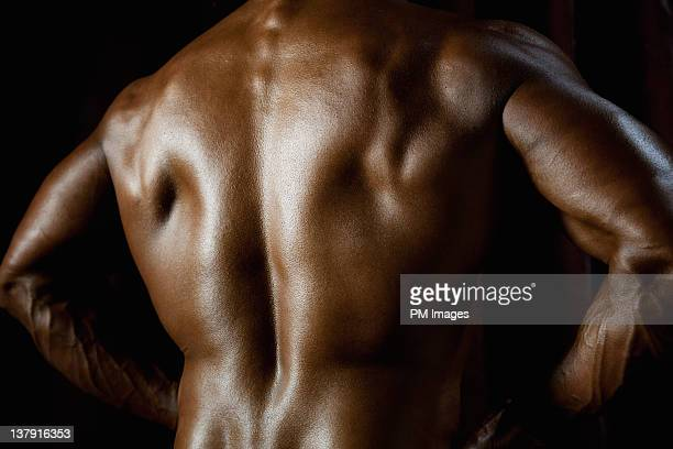 body builder's back - human back stock photos and pictures