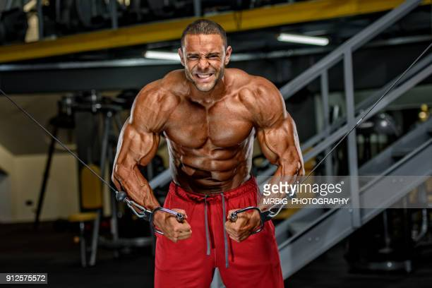 body building workout - human muscle stock pictures, royalty-free photos & images