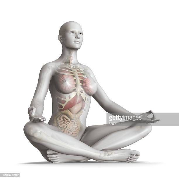 body in balance - human internal organ stock photos and pictures