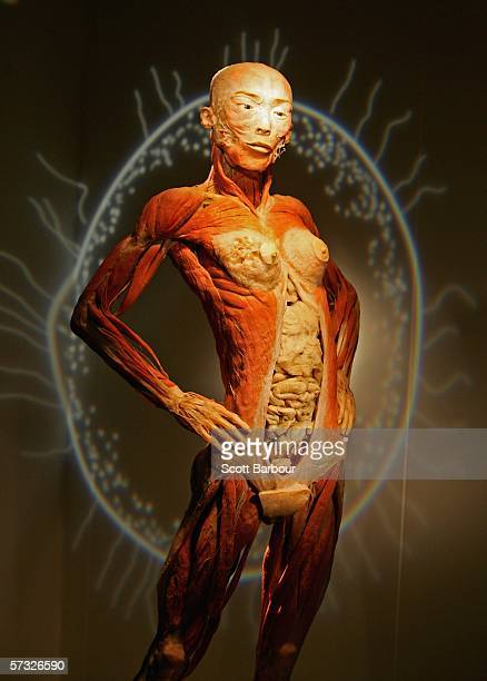 A body specimen stands on display during the BodiesThe Exhibition on April 12 2006 in London England The exhibition gives the public the unique...