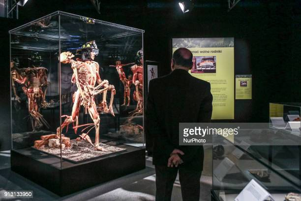 Body Worlds exhibition in shopping center in Katowice Poland 9 February 2017The exhibition of human anatomy created by Dr Gunther von Hagens is based...
