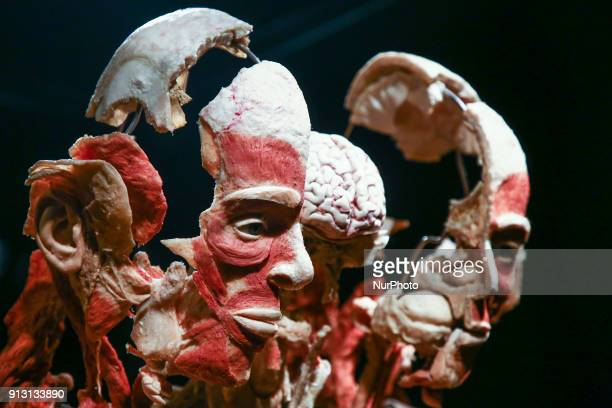 Body Worlds exhibition in shopping center in Krakow Poland 1 February 2018The exhibition of human anatomy created by Dr Gunther von Hagens is based...