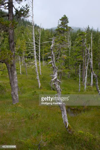 Bog landscape with sphagnum mosses, sedges, and stunted black spruce and tamarack trees, at Idaho Inlet on Chichagof Island, Tongass National Forest,...