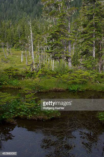 Bog landscape with sphagnum mosses sedges and stunted black spruce and tamarack trees at Idaho Inlet on Chichagof Island Tongass National Forest...