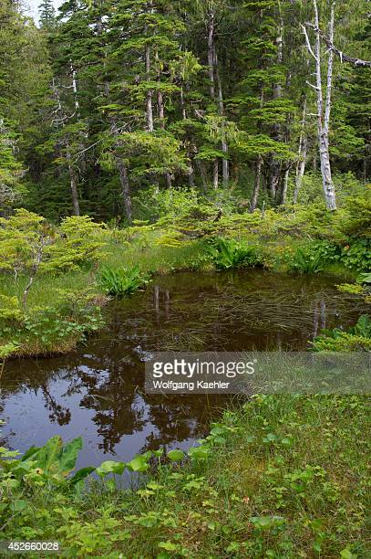 Bog landscape with sphagnum mosses sedges and stunted spruce and tamarack trees at Idaho Inlet on Chichagof Island Tongass National Forest Alaska USA