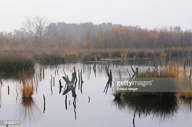 Bog pond in autumn, Dutch raised bog reserve Bargerveen, Netherlands, Europe
