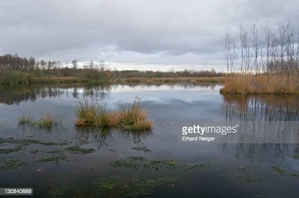 Bog pool, Bargerveen International Nature Park, Netherlands, Europe