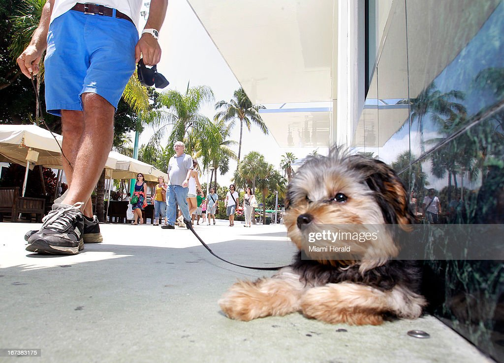 Service Dogs Pictures Getty Images