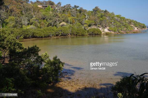 boggy creek at low tide from djirringanj walking track, merimbula, new south wales, australia - flowing cape stock pictures, royalty-free photos & images