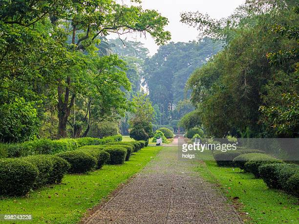 bogor botanical gardens - bogor stock pictures, royalty-free photos & images
