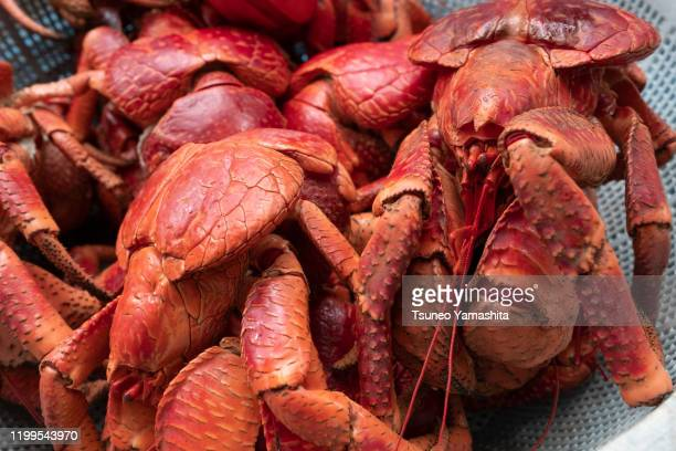 boiled coconut crab - coconut crab stock pictures, royalty-free photos & images