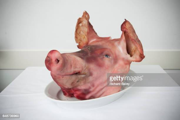 A boiled pigs head on a plate.