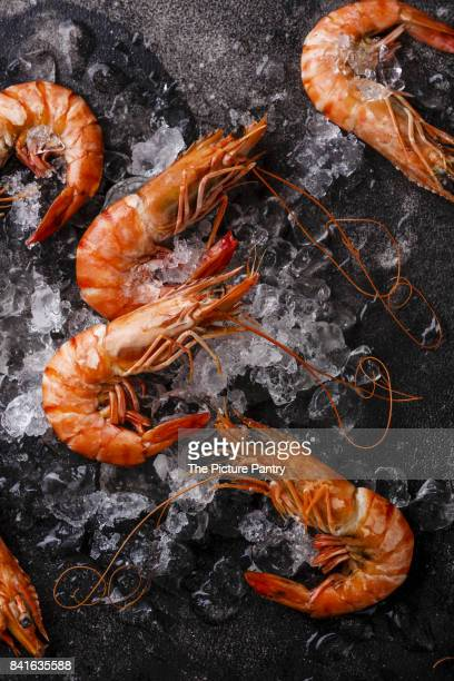boiled pink tiger prawn shrimp on ice on black background close-up - ウシエビ ストックフォトと画像