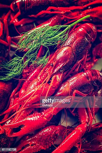 Boiled Red Crayfish with Fresh Dill