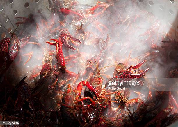 boiling crawfish - louisiana stock photos and pictures
