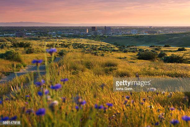 boise idaho valley from surrounding foothills in spring framed by wildflowers, sunset view - idaho stock pictures, royalty-free photos & images