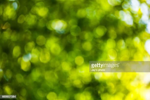 Bokeh in a green natural background, defocused