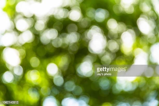 bokeh in sunny forest - セレクティブフォーカス ストックフォトと画像