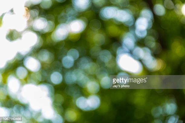 bokeh in sunny forest - focus on foreground stock pictures, royalty-free photos & images