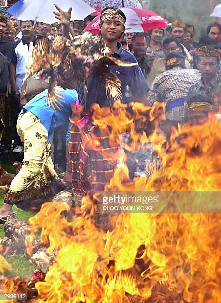 Bolangan villagers take delight in throwing live chickens on a fire in the town of Tabanan, central Bali island in Indonesia 06 February 2004....
