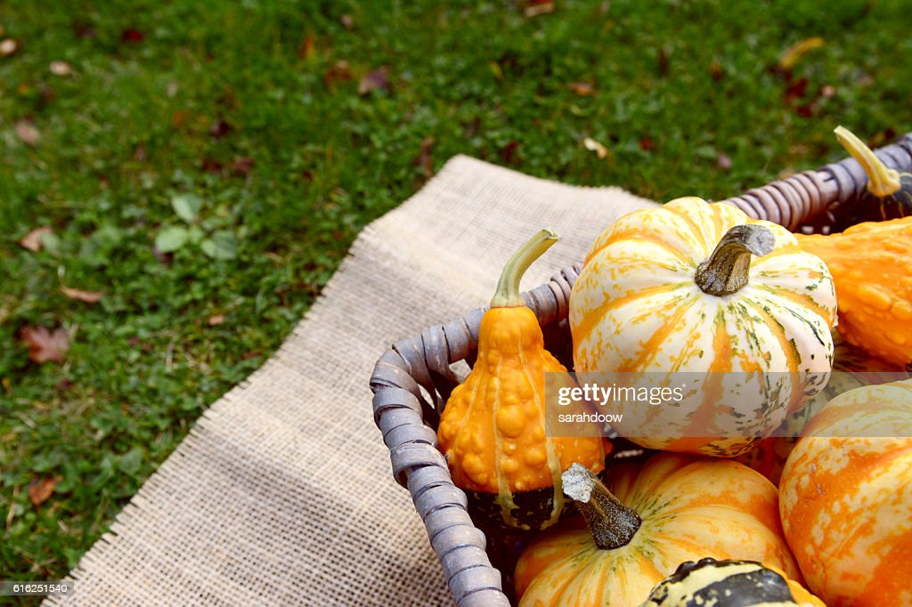 Boldly coloured and patterned gourds in a basket : Foto de stock