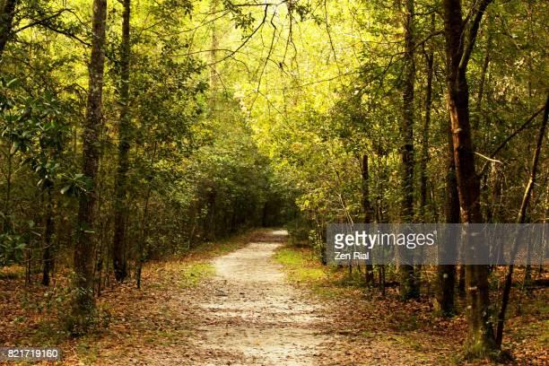 bolen bluff trail, paynes prairie preserve state park, florida usa - gulf coast states stock-fotos und bilder